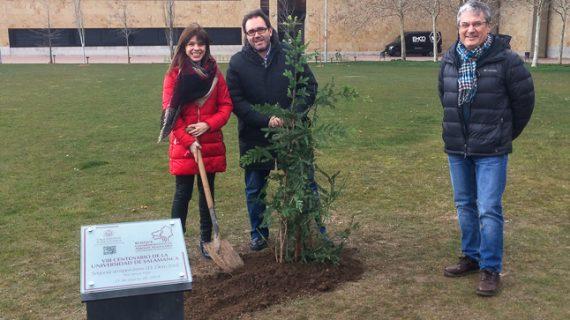 Una secuoya roja, nuevo 'árbol singular' del Campus Unamuno