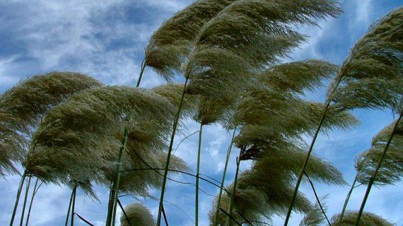 La arboleda de La Aldehuela, acordonada por el fuerte viento