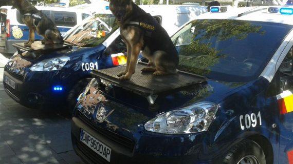 Las unidades caninas de la Policía Local de Salamanca viajan a Bélgica