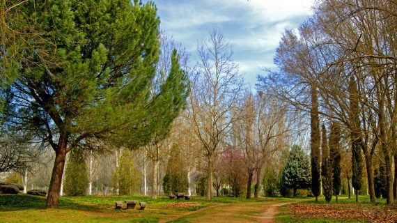 El Pleno Municipal aprueba la adjudicación del nuevo contrato de parques y jardines