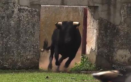 Los toros de Pilar Población para los Espantos de Ledesma