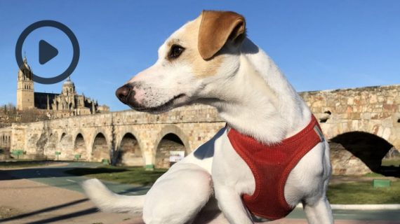 La gira nacional de 'Pipper', el primer perro turista, ha comenzado en Salamanca