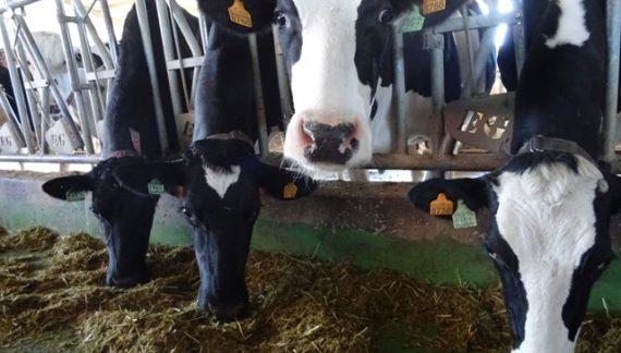 Asaja denuncia la descompensación entre los precios de la leche de Francia y España